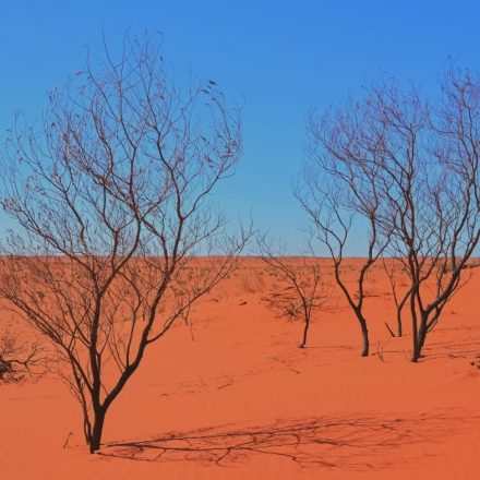 red desert with blue sky and bare trees